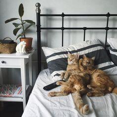 """Anya Yukhtina on Instagram: """"Это коты в чистоте и порядке от @qleanlife (и очередное признание в любви этому сервису, лучшему в своей сфере)  #qleanlife"""""""