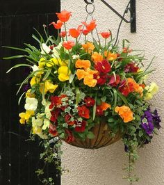 In this article we display a lis of the best Flowers to Use in Hanging Baskets. These flowers are a beautiful decoration for your house. Plants For Hanging Baskets, Hanging Pots, Hanging Flowers, Container Flowers, Container Plants, Container Gardening, Succulent Containers, Outdoor Flowers, Garden Planning