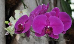 Orchid photographs. Prints for sale. White by MyCreativeCapture #CraftShout www.melissaroephotography.com $20