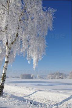 Winterlandschaft Bilder: Poster von Tanja Riedel bei Posterlounge.de