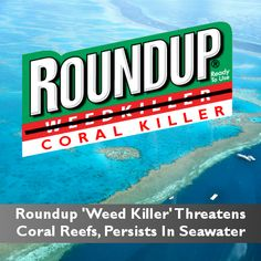 A highly concerning new study published in the journal Marine Pollution Bulletin indicates that Roundup may be harming coral.