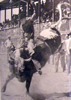 CHASING HIS TAIL.  Jim Shoulders competes in the Bull Riding - Cheyenne Frontier Days - Cheyenne, Wyoming