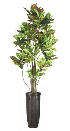 Laura Ashley Home Croton Tree in Planter
