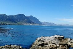 Hermanus, W Cape, South Africa. Out Of Africa, West Africa, South Africa, North South East West, My Land, African Beauty, Africa Travel, Cape Town, Coastal