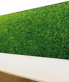 stabilized-moss-wall                                                       …