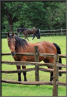 Bij Stichting De Paardenkamp mag je elke dag (behalve Nieuwjaarsdag, Koningsdag en 1e kerstdag) tussen 10.00 en 16.00 uur grats langskomen voor een bezoekje aan de oude paarden die hier opgevangen worden of om een rondleiding van een enthousiaste medewerker te krijgen!