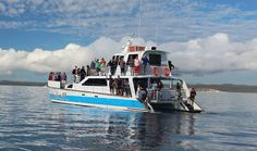 Whale Watching, Great Photos, Freedom, The Past, Boat, Liberty, Political Freedom, Dinghy, Boats