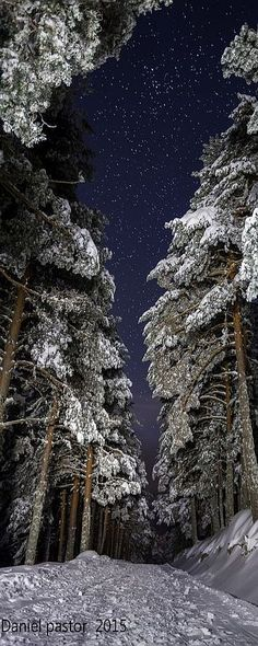 WINTER WONDERLAND SCENERY #by  Daniel Pastor    #SNOW TREE WOOD FOREST PATH WAY SKY NIGHT