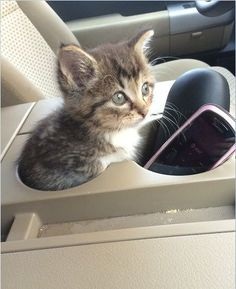 Cup holder or kitty car seat? http://ift.tt/2atpdwe