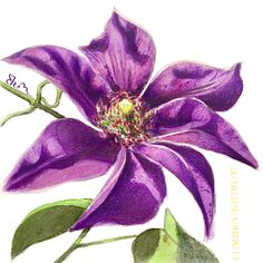 Watercolor Illustration. Clematis Flower, Flora And Fauna, Watercolor Illustration, Digital Art, Flowers, Plants, Plant, Royal Icing Flowers, Flower