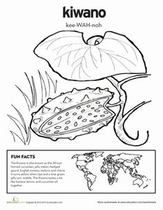 first grade nature geography worksheets kiwano coloring page