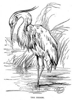 Beautiful line drawing of a wading heron, from reusableart.com.