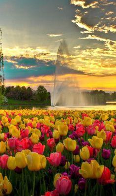 Chicago Botanic Gard Flowers Garden Love