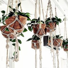 Makers and Finders of unique materials and innovative spaces. Visit our London shops on Lamb& Conduit Street and Vyner Street. Macrame Art, Vyner Street, Plant Hanger, House Plants, Greenery, Beautiful Homes, Boho, Lamb, Instagram Posts