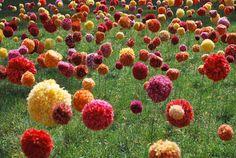 Amazing field of hand-made pom pom flowers by visual artist Hannah Streefkerk.