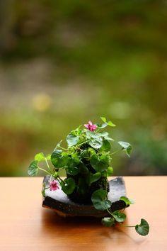kumirious - (via moss bonsai Ikebana, Garden Terrarium, Bonsai Garden, Japanese Plants, Little Gardens, Moss Garden, Bonsai Art, Mini Plants, Miniature Plants