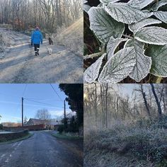 Chilly walks #countryliving #walks #walkswithmydogs #pembrokeshire #canestonwoods #icy Country Living, Walks, Passion, Canning, Craft, Wood, Country Life, Creative Crafts, Woodwind Instrument