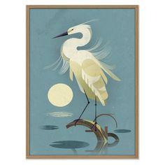 Little Egret by Dieter Braun - East End Prints Art And Illustration, Creative Illustration, Framed Art Prints, Poster Prints, Poster Shop, Animal Paintings, Bird Paintings, Bird Art, Cool Art