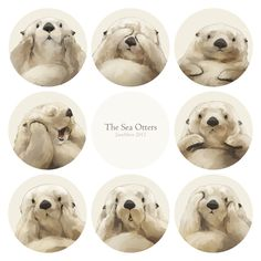 Oh my many emotions captured by a cute sea otter <3