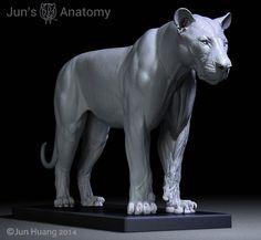 Jun's Anatomy Big Cats Anatomy models by Jun Huang — Kickstarter: