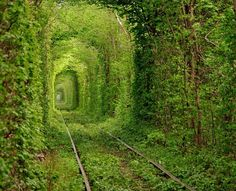 train tracks, secret gardens, tree, old trains, the secret garden, travel, place, walk, bucket lists