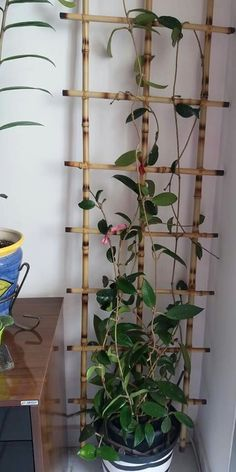 Enchantingly Beautiful Cinder Block Ideas that Can Use for Your Garden Porch Trellis, Diy Trellis, Garden Trellis, Indoor Garden, Garden Art, Garden Plants, Indoor Plants, House Plants Decor, Plant Decor