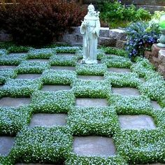 Blue Star Creeper makes everything around it look good. A sweet little filler, it looks like a moss with tiny blue flowers, but it's surprisingly tough. The first year, it grows close to the ground li #shade_garden_walkway