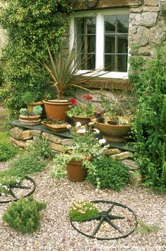 Image detail for -Containers with mixed planting and gravel garden with herb wheels, Windmill cottage, Somerset.