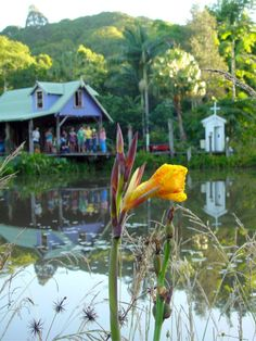 Nimbin, NSW near Byron Bay is indeed a special place in the world.