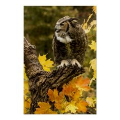 ==> consumer reviews          Autumn Owl Poster           Autumn Owl Poster so please read the important details before your purchasing anyway here is the best buyDiscount Deals          Autumn Owl Poster Online Secure Check out Quick and Easy...Cleck Hot Deals >>> http://www.zazzle.com/autumn_owl_poster-228122995445684740?rf=238627982471231924&zbar=1&tc=terrest