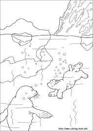 Keptalalat A Kovetkezore Arctic Animals Coloring Pages Polar Bear Coloring Page Bear Coloring Pages Animal Coloring Pages