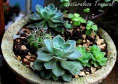 Arreglo con plantas suculentas en maceta de piedras