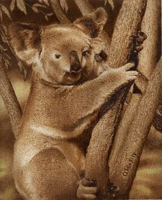 Koala. Pyrography on Paper. Clive Smith.