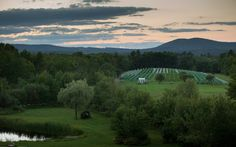 The Vineyard at Cellar Door Winery...take a tour and a taste. Repinned by www.mygrowingtraditions.com