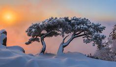 Korea Południowa, Prowincja Jeolla Północna, Park Prowincjonalny Daedunsan, Góra Daedunsan, Sosny, Wschód Słońca, Drzewa, Zima, Mgła