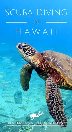 Discover the best dive sites and the top travel tips to go diving in Hawaii for your next scuba diving trip Cozumel Scuba Diving, Best Scuba Diving, Scuba Diving Gear, Cave Diving, Hawaii Honeymoon, Hawaii Vacation, Hawaii Travel, Thailand Travel, Scuba Travel