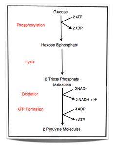 Pin on IB Biology HL