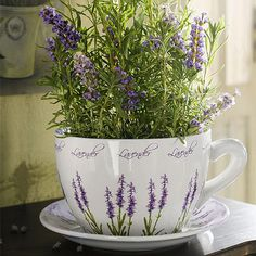 Smaller teacups with flowers/herbs would be cute for wedding favors.