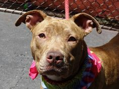 Manhattan NY.  Henney.  Female.  10 mths.   Dies in a.m.  See Urgent Part 2 on fb.***RESCUED***