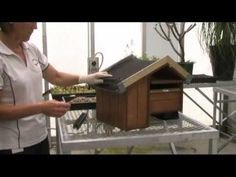 Create your own green roof letterbox (or dog kennel)! A great project for schools or for creating in your own home - check out the video below for a step by step process of making a mini green roof.