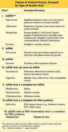 CLASSES OF VIRUSES Animal viruses as general catagories are included in the table, while the examples given are specific to humans. The table shows groups by DNA / RNA, and also groups by single strand or double stand. Medical Laboratory Scientist, Cervical Cancer, Cold Sore, Microbiology, Perception, Dna, Nursing, Palace, Health Care