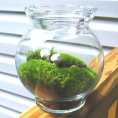 Simple #moss #terrarium