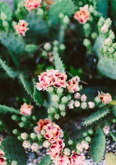 blooming cacti via bohosantafetrail