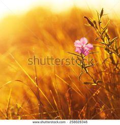 Field Meadow Stock Photography   Shutterstock