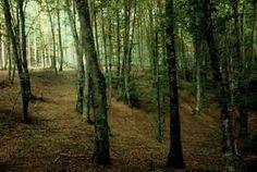 Bosque caducifolio del Parque Natural de Urkiola. (Ampliar en una nueva ventana)
