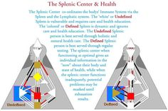 Splenic Center Illustration