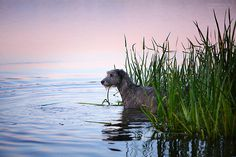 Sunset on the wather - - AnastasiaVetkovskaya - From The Dog Blog