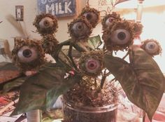 Swamp Moss Eyeball Plant.... for Halloween of course  I love this plant... it almost seems like it is alive and it is a pet or something LOL