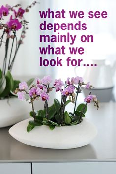 what we #see depends mainly on what we look for... #quote #orchids