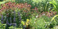Lanaudière Activities, Plants, Tourism, Plant, Planting, Planets